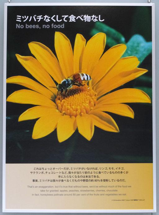 DSCF6365-20150617.jpg